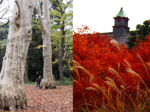 小石川植物園の紅葉