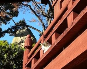 護国寺の猫